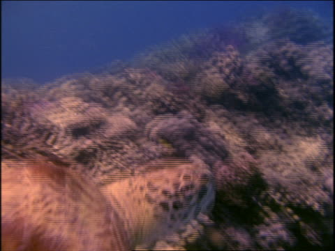 vídeos de stock e filmes b-roll de underwater close up sea turtle swimming near bottom of ocean - organismo aquático