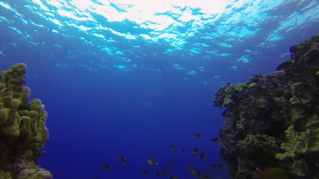 underwater: colorful fish swimming among amazing coral reef in deep blue ocean - 広角撮影点の映像素材/bロール
