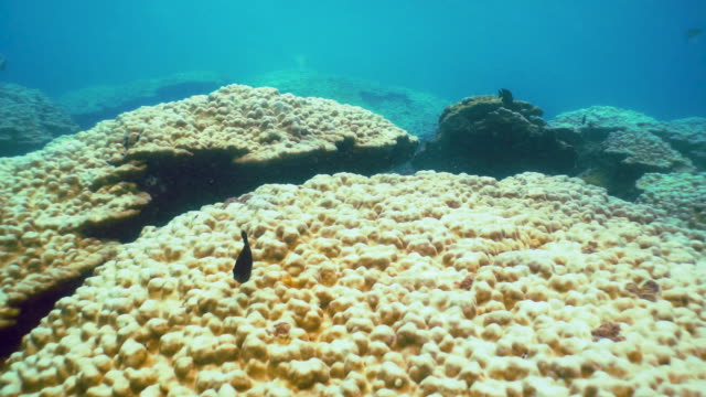 underwater coral bleaching on coral reef, phi phi, thailand - animal colour stock videos & royalty-free footage