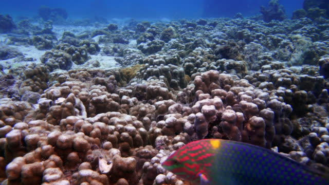 underwater coral bleaching on damaged fragile coral reef ecosystem - dead stock videos & royalty-free footage
