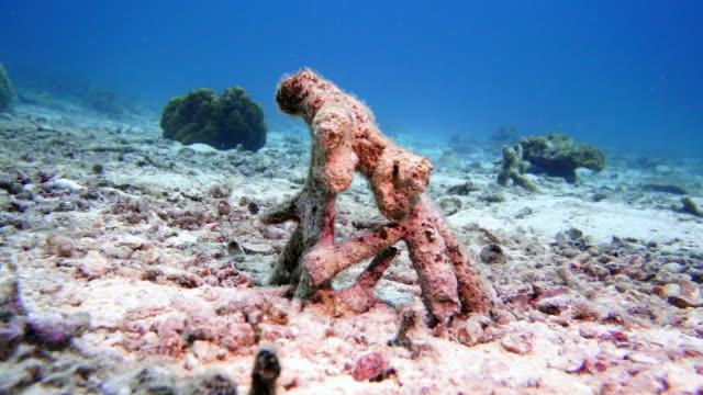 vídeos de stock e filmes b-roll de underwater coral bleaching on dead coral reef - acidificação dos oceanos
