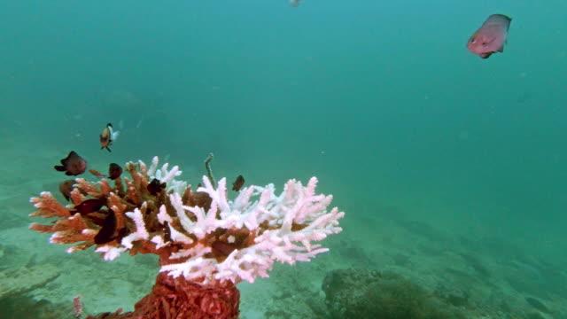 vidéos et rushes de blanchiment de corail sous-marin sur les dommages environnementaux coralliens de table - exosquelette d'animal