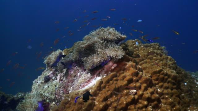 vídeos de stock e filmes b-roll de underwater coral reef a carbon capture system - acidificação dos oceanos