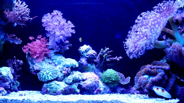 underwater coral reef and  fishes. - aquarium stock videos & royalty-free footage