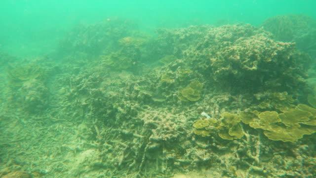 underwater coral reef bleaching and death - pacific ocean stock videos & royalty-free footage