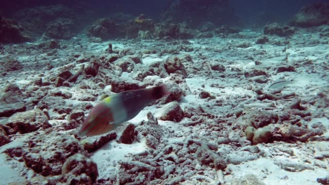 Underwater coral reef mass bleaching and destruction