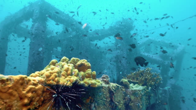 underwater coral reef restoration, phi phi island, thailand - ocean acidification stock videos and b-roll footage