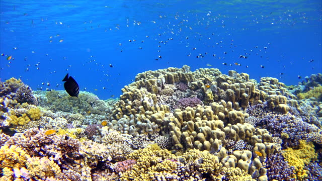 underwater coral reef sea life with lot of fisch - seabed stock videos & royalty-free footage