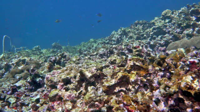 underwater coral reef suffering coral bleaching - reef stock videos & royalty-free footage