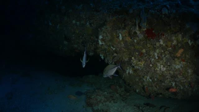Underwater dark cave, Palau