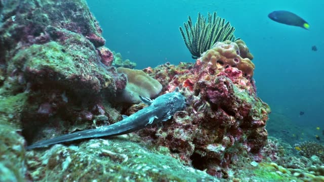 underwater dead catfish on coral reef - plant process stock videos & royalty-free footage