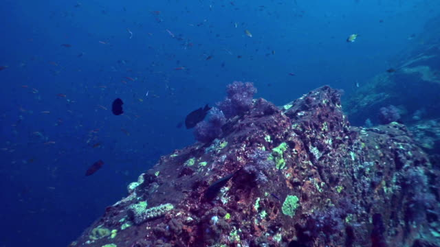 underwater deep sea pinnacle on ocean floor - scuba diver point of view stock videos & royalty-free footage