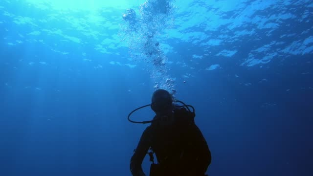 underwater: diver in beautiful blue water - underwater diving stock videos & royalty-free footage