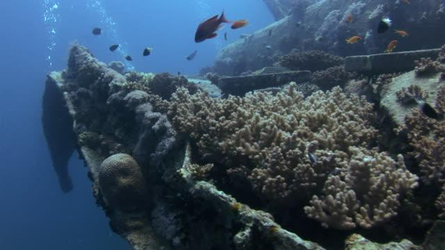 vídeos de stock, filmes e b-roll de w/s underwater, diving a wreck, coral covering the boat - ponto de vista de mergulhador
