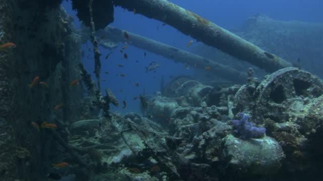 vídeos de stock, filmes e b-roll de w/s underwater, diving a wreck - ponto de vista de mergulhador