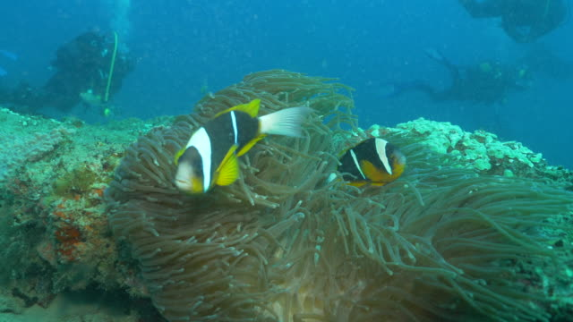 Underwater diving and scenics of Ponta do Ouro/ Mozambique