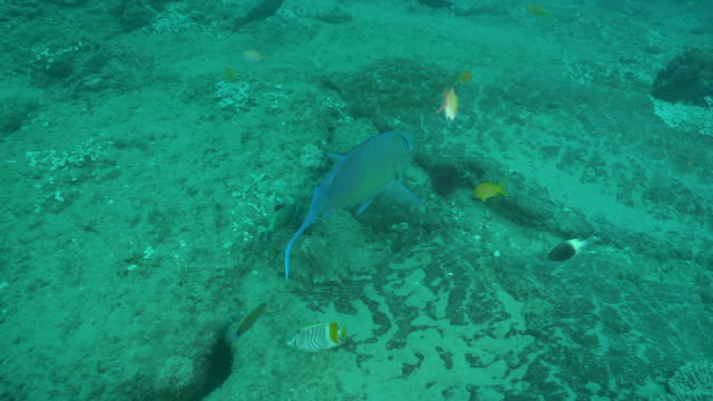 underwater diving and scenics of ponta do ouro/ mozambique - parrotfish stock videos & royalty-free footage