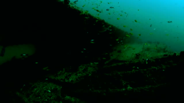 underwater diving and scenics of sodwana bay/ south africa - shipwreck stock videos and b-roll footage