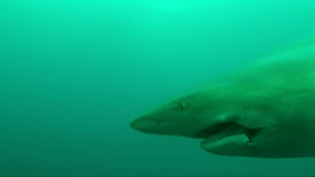 underwater diving and scenics of sodwana bay/ south africa - カマストガリザメ点の映像素材/bロール