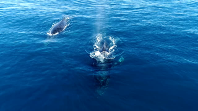 stockvideo's en b-roll-footage met underwater diving and scenics of sodwana bay/ south africa - walvis