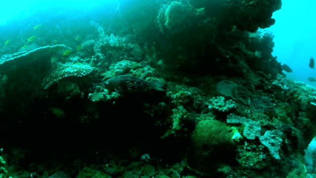 Underwater diving and scenics of Sodwana Bay/ South Africa