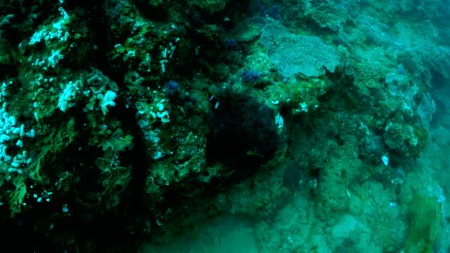 vídeos y material grabado en eventos de stock de underwater diving and scenics of sodwana bay/ south africa - grupo mediano de animales