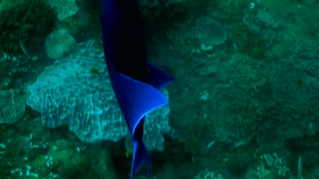 underwater diving and scenics of sodwana bay/ south africa - sodwana bay stock videos and b-roll footage