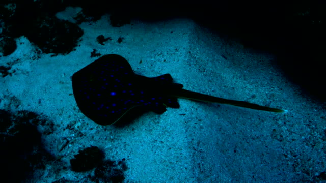 underwater diving and scenics of sodwana bay/ south africa - stingray stock videos and b-roll footage