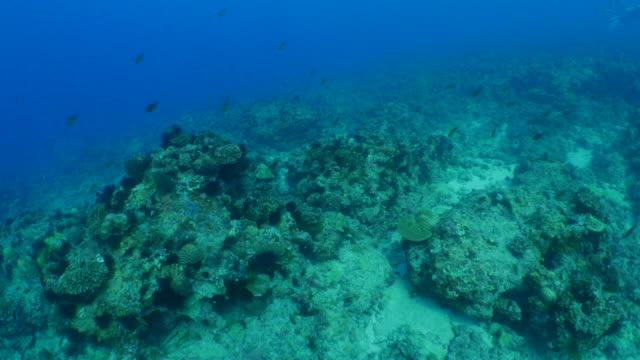 Underwater diving in coral reef