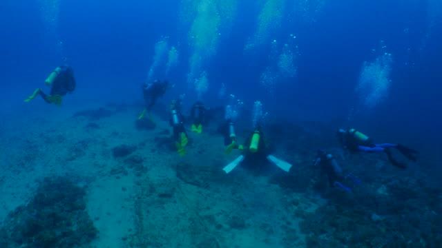 underwater diving in liuqiu island, taiwan - invertebrate stock videos & royalty-free footage