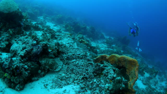 vídeos y material grabado en eventos de stock de submarinismo en el mar tropical - protección de fauna salvaje