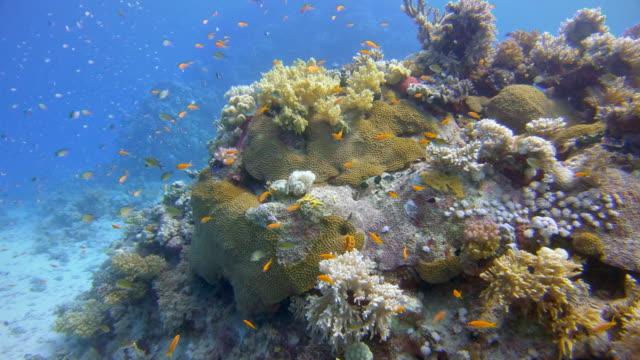 紅海の熱帯魚がたくさん入った美しいサンゴ礁での水中ダイビング - ラハミ湾/マルサ・アラム - グラスフィッシュ点の映像素材/bロール