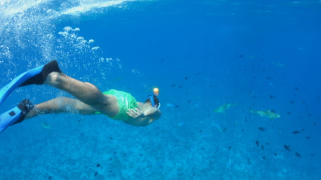 underwater diving snorkeling with sharks in bora bora tropical island. - idyllic video stock e b–roll