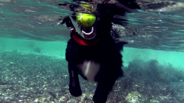 underwater dog - catching stock videos & royalty-free footage