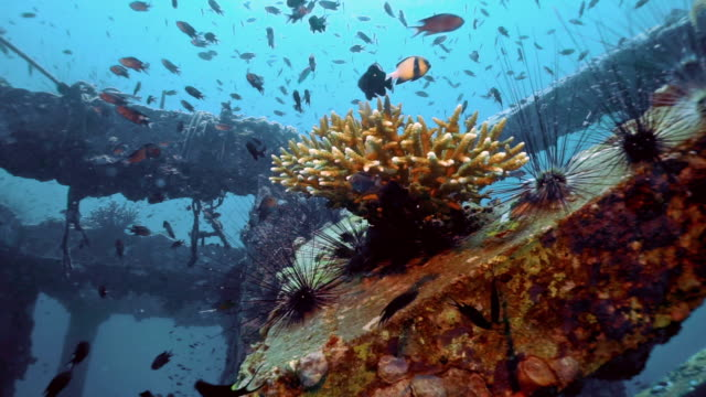 underwater eco tourism artificial reef, coral nursery restoration project, viking bay, phi phi island, thailand - sustainable tourism stock videos & royalty-free footage
