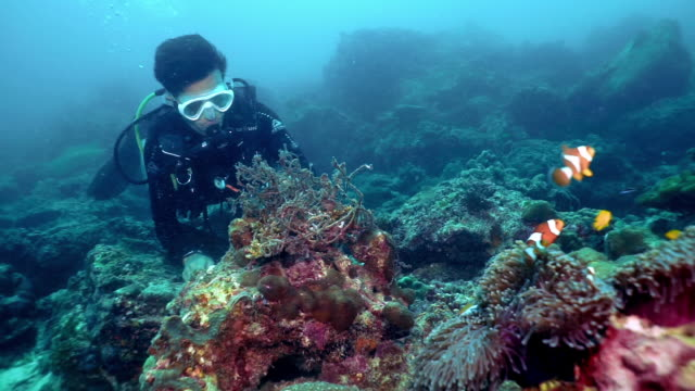 underwater eco tourist scuba diver removing pollution from coral reef near clown fish - environmentalist stock videos & royalty-free footage