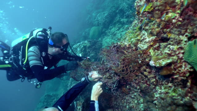 underwater environmental cleanup two eco tourist scuba divers removing discarded fishing net pollution from underwater coral reef - sustainable tourism stock videos & royalty-free footage