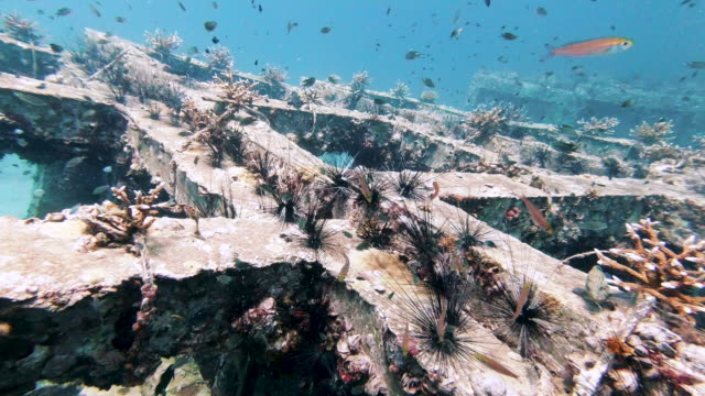 underwater environmental conservation project artificial reef coral nursery - ocean acidification stock videos & royalty-free footage