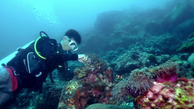 underwater environmentalist scuba diver removing ghost net pollution from coral reef - sea anemone stock videos & royalty-free footage
