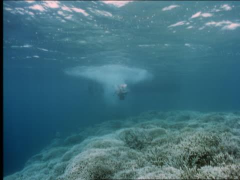 underwater female scuba diver in bikini near bottom of ocean - invertebrate stock videos & royalty-free footage