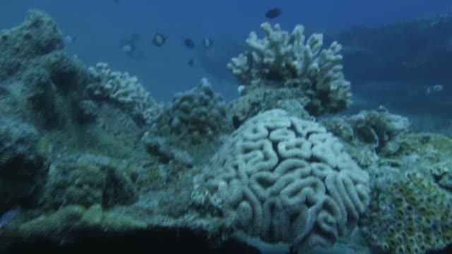underwater, fish and coral reef, ogasawara, japan - algae stock videos & royalty-free footage