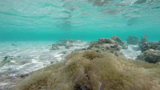 underwater fish, sea anemone - tahitian culture stock videos and b-roll footage