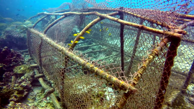 underwater fishing ghost net environmental damage. - netting stock videos & royalty-free footage
