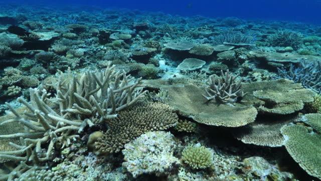 Underwater footage in the Kerama Islands; Dolly shot of various coral reefs in the sea, Okinawa, Japan