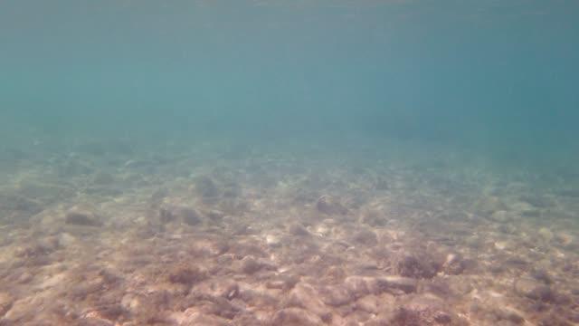 underwater footage in the sea - underwater camera stock videos & royalty-free footage