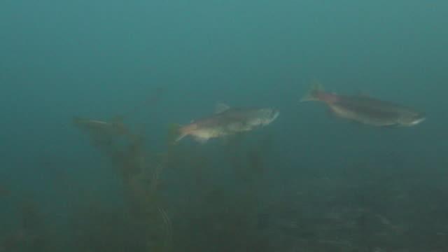 Underwater footage of Lake Shikotsu