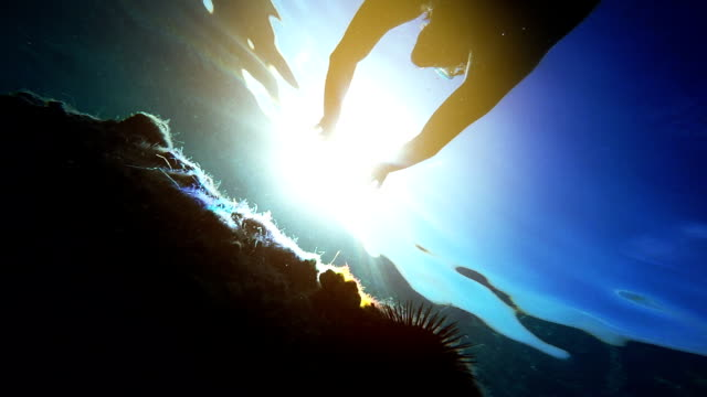 underwater footage of man snorkeling in sea towards the sun - sea urchin stock videos and b-roll footage