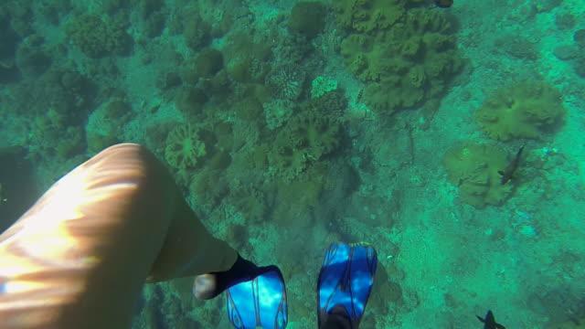 vídeos y material grabado en eventos de stock de underwater footage - young woman swims - grupo pequeño de animales