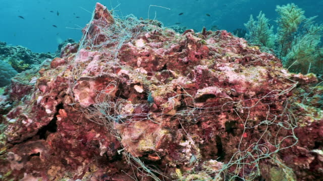 underwater ghost net fishing net pollution choking coral reef - fishing stock videos & royalty-free footage