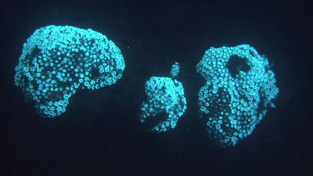 underwater, glowing coral in night sea, chiba, japan - fluorescent stock videos & royalty-free footage